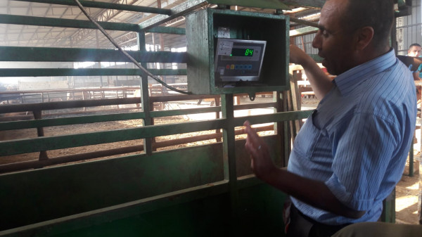 دائرة المكاييل والموازين بغزة تجري جولات تفتيشية لمزارع المواشي والأبقار