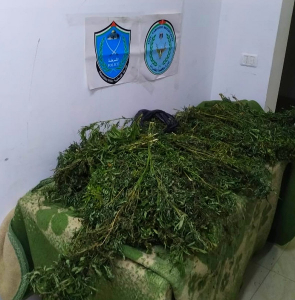 الشرطة تضبط أشتال مخدرات شمال طولكرم