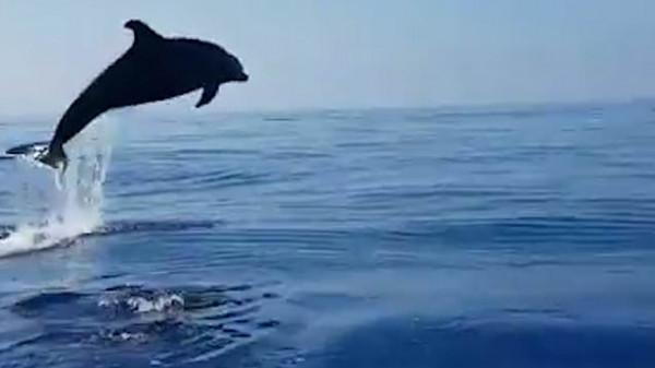 شاهد: دولفين يشكر الصيادين على إنقاذ طفله بطريقته الخاصة