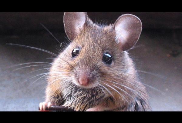 """مصري يفقد حياته بطريقة مُروعة بسبب """"فأر"""""""