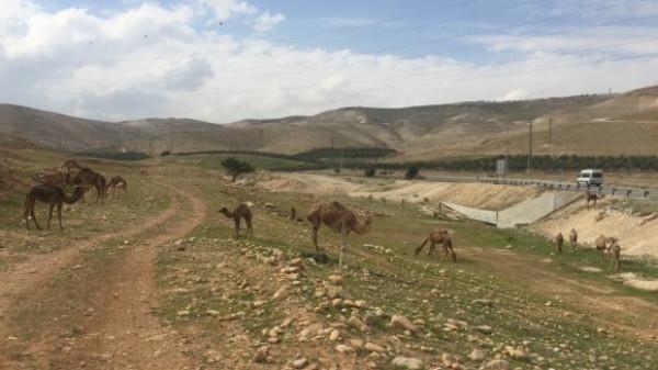 تحذيرات من مخططات إسرائيلية للسيطرة على مساحات شاسعة من بادية القدس