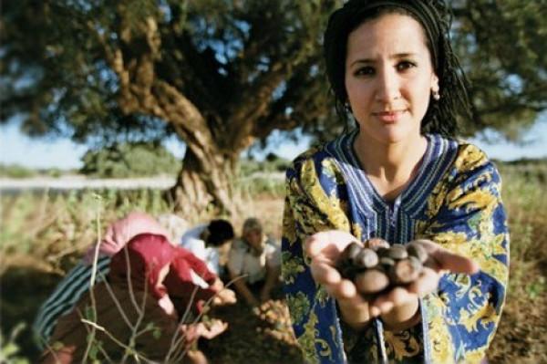 وزارة الزراعة تُحدد رسمياً موعد قطف الزيتون