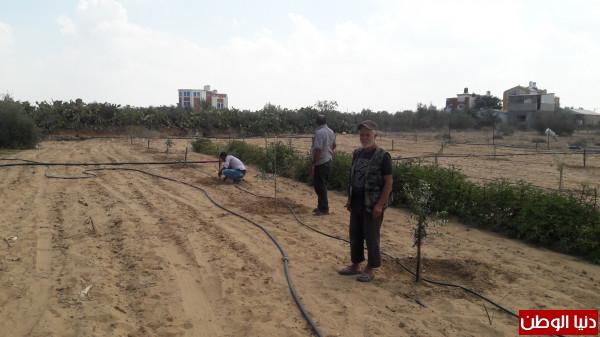 العمل الزراعي بغزة ينتهي من استصلاح وزراعة 24 دونماً زراعياً