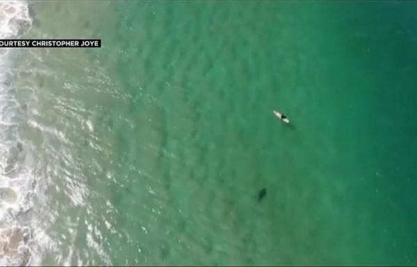طائرة بدون طيار تنقذ رجلاً من هجوم سمكة قرش ضخمة