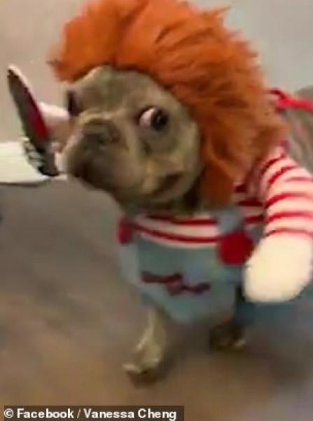 امرأة تحول قطها لكائن مرعب