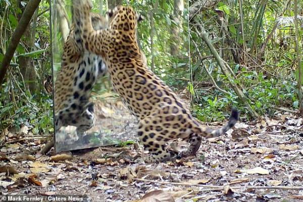 مشاهد جديدة في تجربة انعكاس صورة الحيوانات بالمرآة