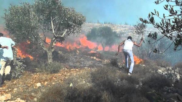 إخماد 10 حرائق واحتراق 230 شجرة في جنين