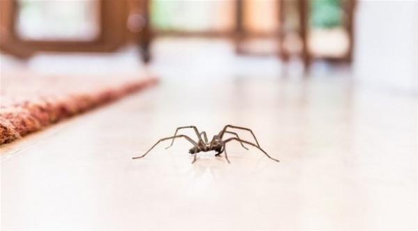 تستخدم حيلة ذكية لإبعاد العناكب عن منزلها