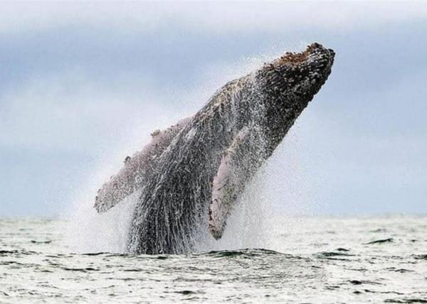 """كيف تحمي الحيتان صغارها؟ دراسة تكشف """"الطريقة السرية"""""""