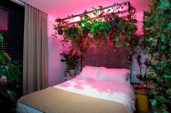 فندق بريطاني يحول غرفه إلى غابات داخلية 9998999460