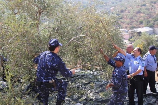 الشرطة تُشارك المواطنين في قطف ثمار الزيتون