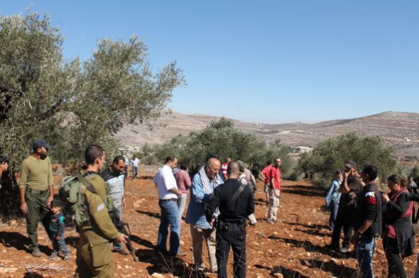 نشطاء يطلقون دعوات للتكاتف والتعاون لقطف ثمار الزيتون في قريوت