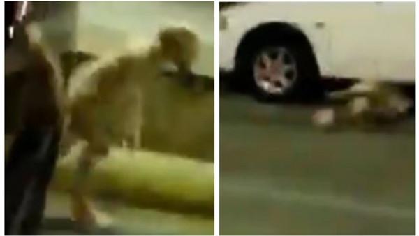 """حقيقة ظهور كائن غريب في كراج سيارات بالمدينة المنورة.. ومغردون: """"جن"""""""