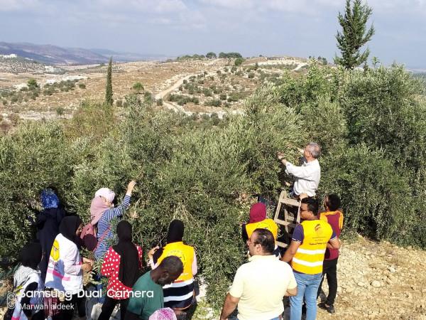 البرغوثي خلال حملة قطف الزيتون في صوريف :إسناد صمود المزارعين مقاومة شعبية