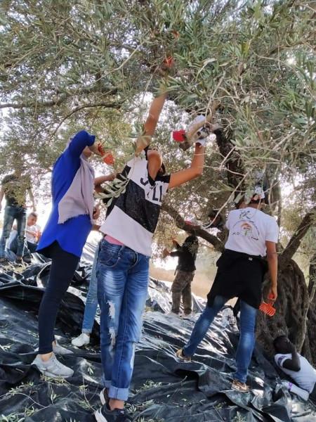 المكتب الوطني للدفاع عن الارض ينظم يوما تطوعيا لقطف ثمار الزيتون