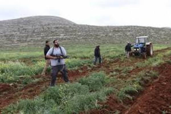 إصابة ثلاثة مواطنين خلال مهاجمة مستوطنين قاطفي الزيتون بنابلس