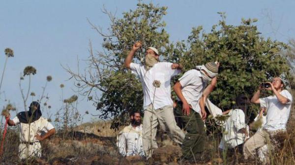 وليد عساف يُوضح كيفية حماية قاطفي الزيتون بالضفة من اعتداءات المستوطنين