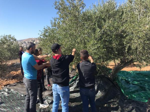 طلبة مركز تأهيل الشبيبة نابلس يشاركون بقطف ثمار الزيتون مع المزارعين بالساوية