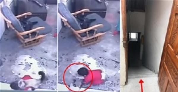 شاهد كيف أنقذت قطة طفلا رضيعا من موت محقق؟