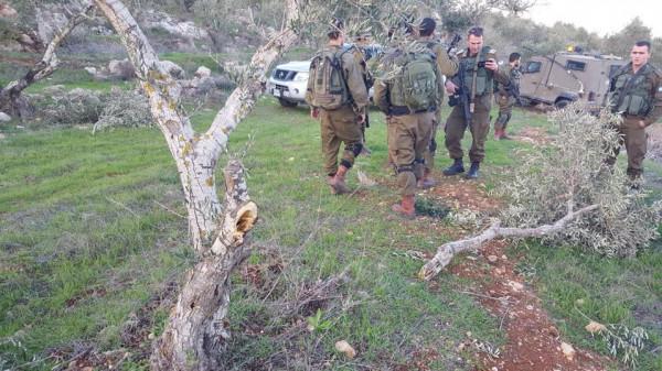 مستوطنون يحطمون أشجار زيتون شمال غرب رام الله
