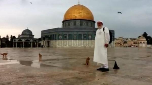 """وصفهن بالمرابطات بالأقصى.. حاج فلسطيني"""" جميع القطط تعرفني"""