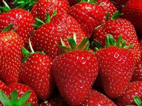 585 مليون دولار اجمالى قيمة الصادرات الزراعية من الخضروات والفاكهة