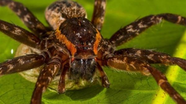 3 أسباب تدفعك لعدم قتل العناكب في المنزل