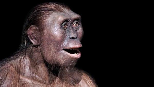 حقيقة صادمة.. ذكاء القردة يتفوق على الإنسان