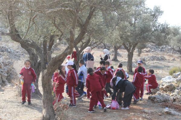 جمعية وأكاديمية تطوع للأمل تنظم فعاليات لقطف الزيتون بالقدس