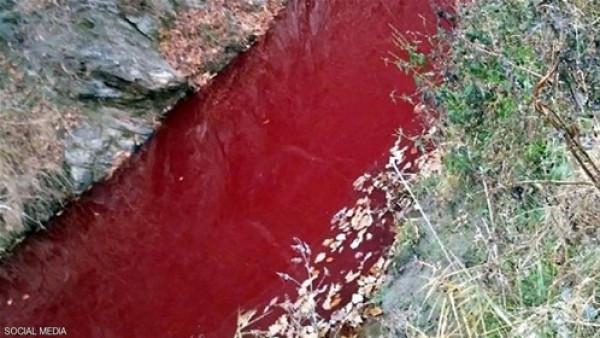 """""""دماء الخنازير"""" تحول مياه نهر إلى اللون الأحمر"""