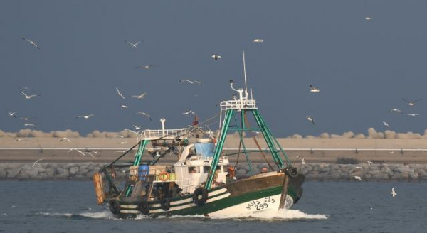 """زكريا بكر لـ""""دنيا الوطن"""": عودة مساحة الصيد لما كانت عليه قبل العدوان"""