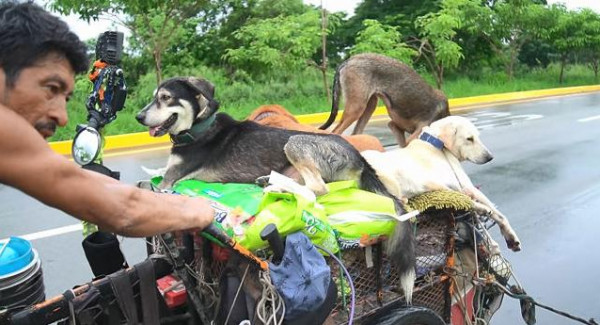 مكسيكى يسير 14 ألف كيلو متر لإنقاذ الكلاب طوال 6 سنوات