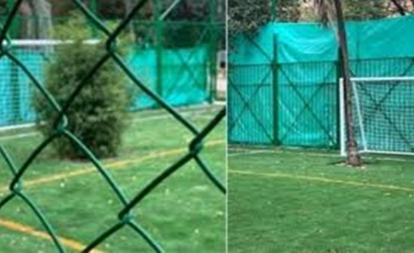 شاهد: شجرتان تحلان مكان حراس المرمى في ملعب كرة قدم