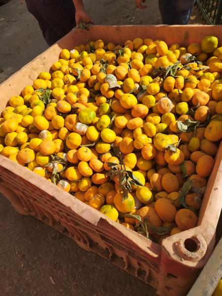 بلدية الخليل تضبط فاكهة فاسدة وتتلفها