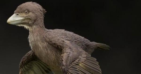 اكتشاف أول طائر بدائي مصاحب للديناصورات قبل 120 مليون سنة
