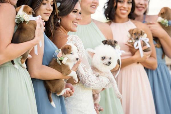 العروس ووصيفاتها يستبدلن باقات الزهور بالكلاب