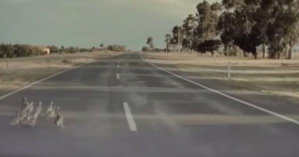 """شاهد: سيارة تسلا تنقذ مجموعة """"بط"""" من الدهس"""