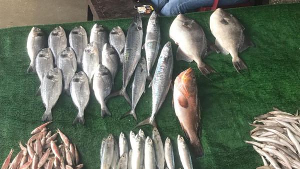 """شاهد: أسعار وأنواع الأسماك المتوفرة في """"الحسبة"""" بغزة"""