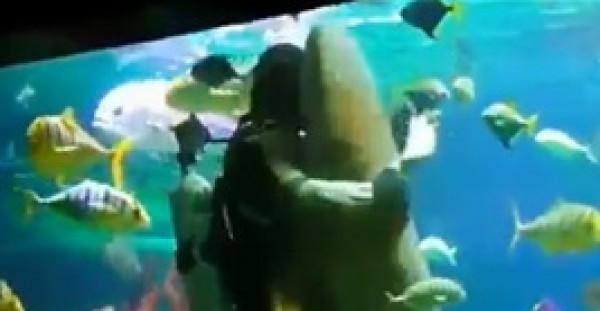 رقصة رومانسية بين غواص وسمكة قرش في أعماق البحار