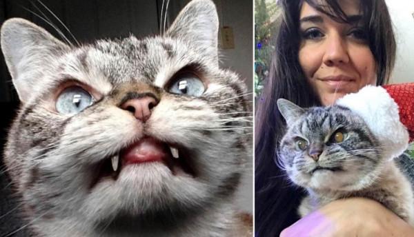 شاهد: قطة دراكولا تجتذب آلاف المتابعين بأنيابها البارزة