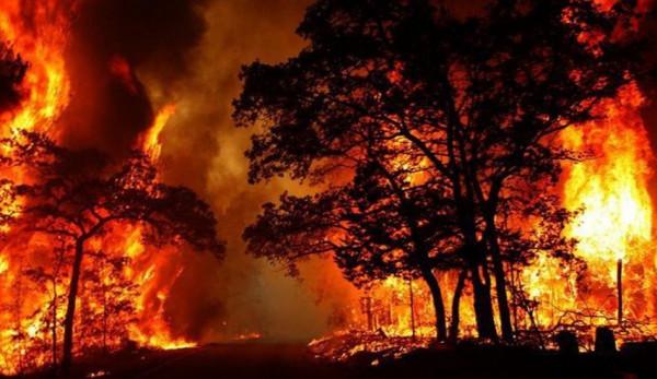 الحرائق تطوّق سيدني والوضع يخرج عن السيطرة بمناطق أخرى