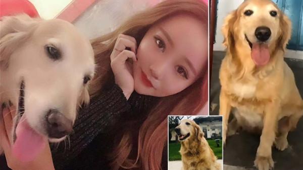 صينية تنفق 40 ألف جنيه استرليني من أجل استنساخ كلبها الأليف