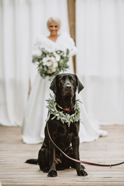 (صور).. رد فعل كلب شاهد صاحبته لأول مرة في فستان الزفاف