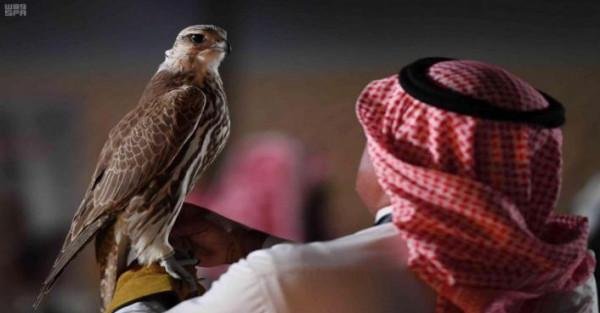 """""""غوميز""""و""""هتلر""""..  أغرب أسماء الصقور المشاركة بمهرجان الملك عبدالعزيز"""
