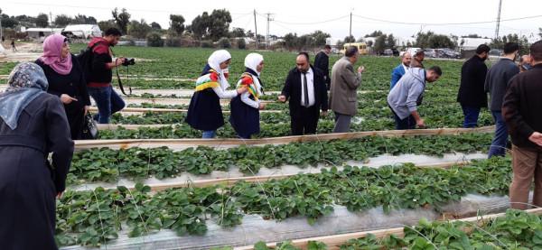 صور: مديرية شمال غزة تشارك في افتتاح موسم الفراولة للعام 2019-2020