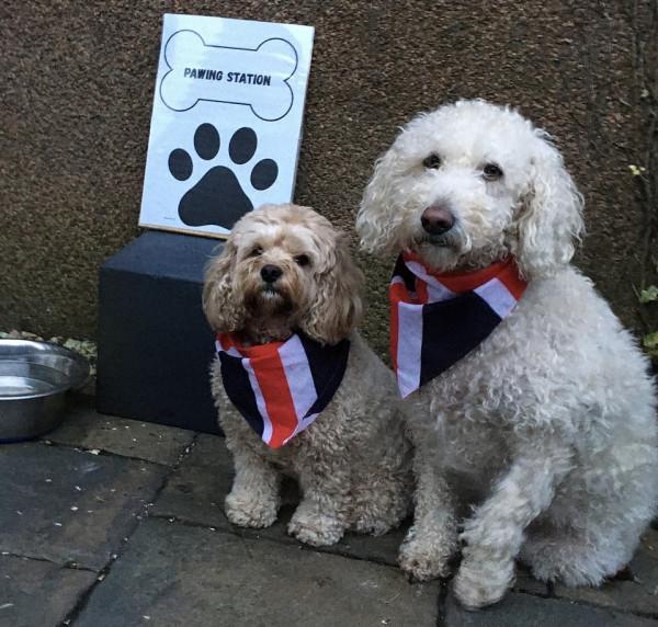 الكلاب تشارك بكثافة في الانتخابات البريطانية