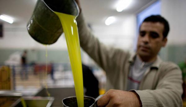 مطالبات بإنشاء بنك لزيت الزيتون 9999014538