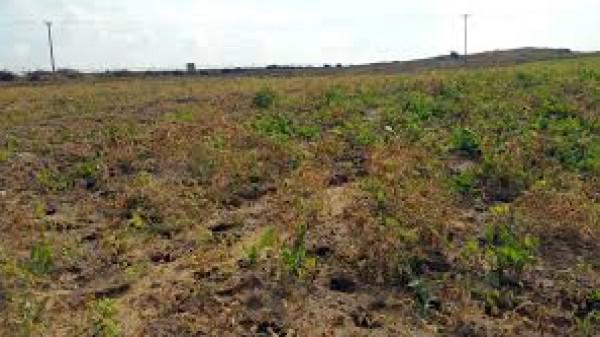 الخارجية والمغتربين: استهداف أراضي قطاع غزة الزراعية عدوان عنصري بامتياز