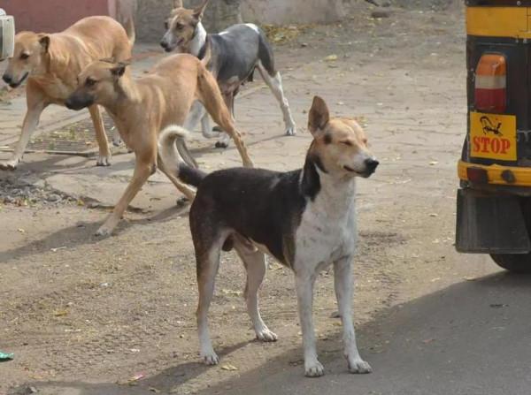 الكلاب الضالة تنهش طفلاً عمره ساعات قليلة داخل مستشفى خاص بالهند