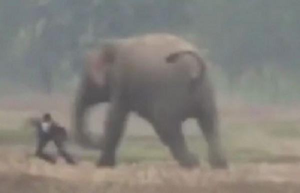 """""""أنا لا أحب السيلفي"""".. رد فعل صادم من فيل بسبب صورة"""